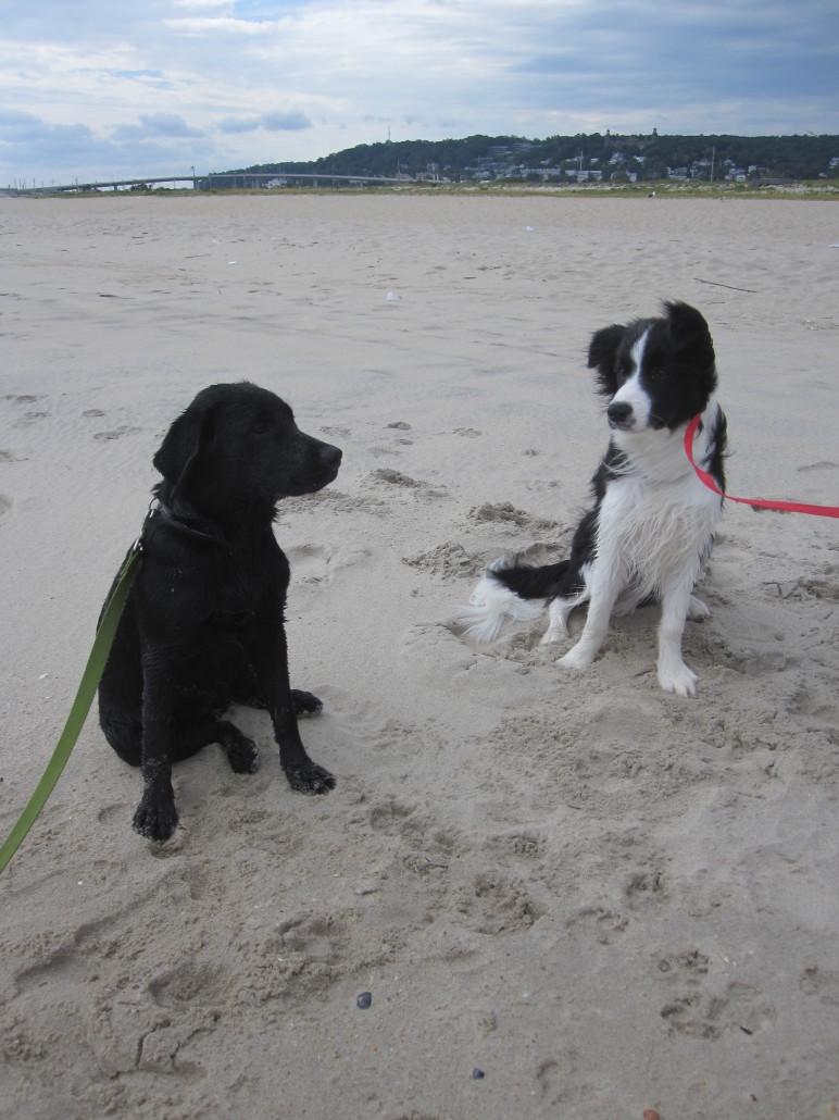 Services Royal Canine Dog Training Llc
