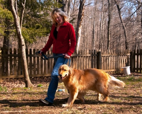 training Golden Retriever